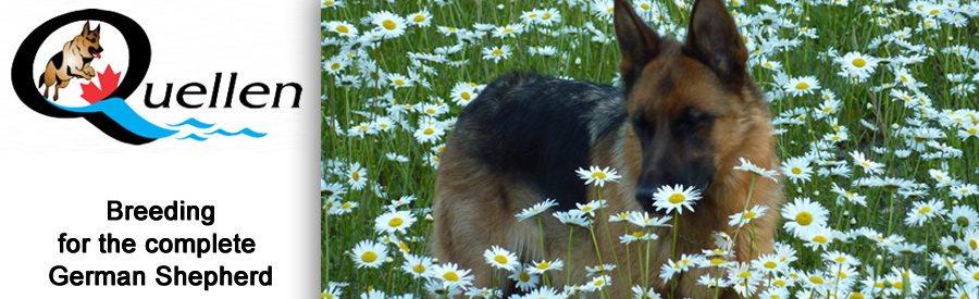 Quellen German Shepherds