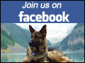 Join Quellen German Shepherds on Facebook!